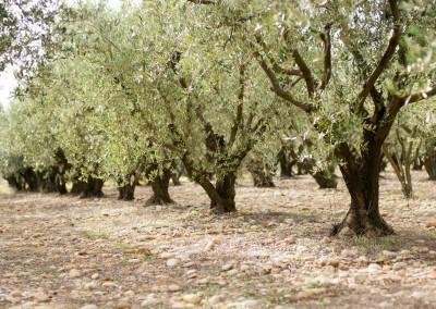 Notre domaine oléicole situé au coeur de la vallée de l'Hérault