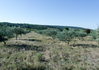 Nous récoltons également, sur demande, les vergers des producteurs locaux et traitons la récolte
