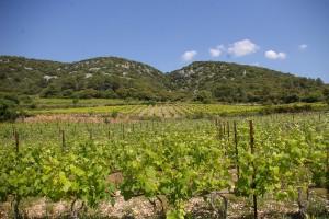Vignes et garrigues - crédits photos ©OTI Saint-Guilhem-le-Désert