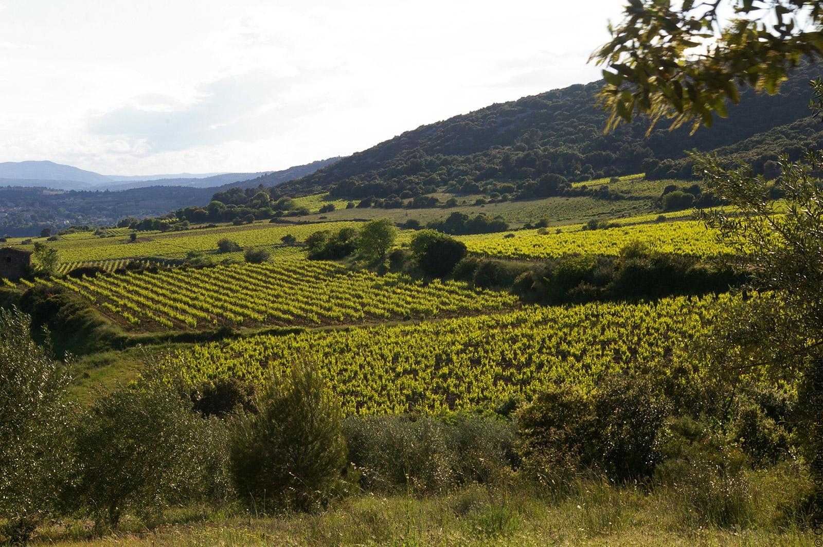 Vignoble en vallée de l'Hérault - crédits photos ©OTI Saint-Guilhem-le-Désert